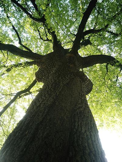 arbre_400x534